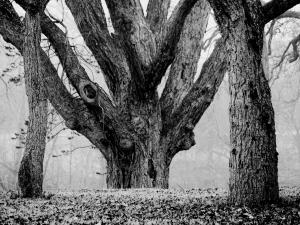 Pecan Tree 2014-01-10T11_09_51
